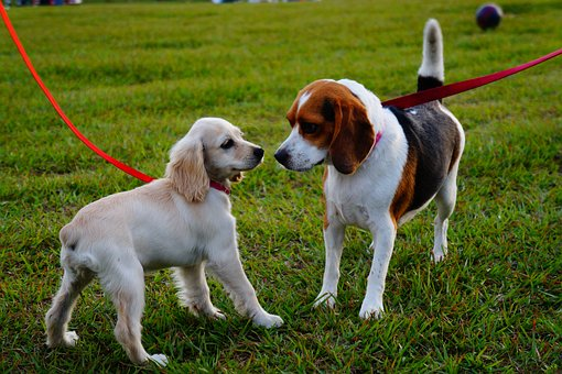 How To Train Dog To Have Good Manners